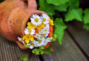 Gode ideer til haveaktiviteter i foråret og om sommeren